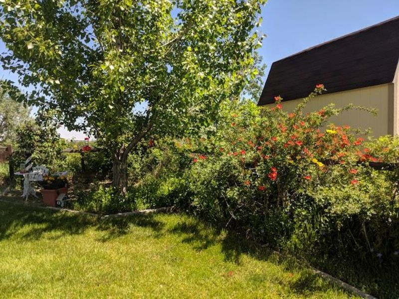 1 Bedroom 1 Bathroom Apartment for rent at Great Neighborhood House to share in Columbine in Littleton, CO