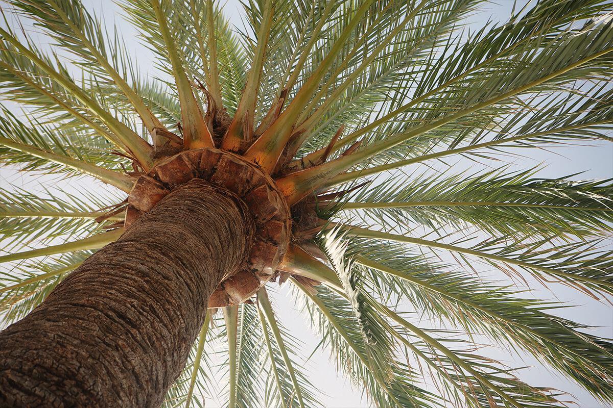 Saratoga Palms